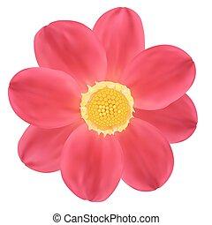 δάλια , μικροβιοφορέας , flower., εικόνα , κόκκινο