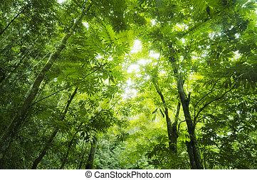 δάσοs , ηλιακό φως