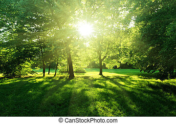 δάσοs , καλοκαίρι , δέντρα
