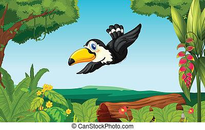 δάσοs , πουλί