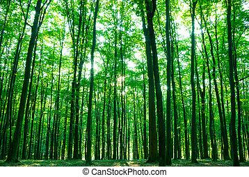 δάσοs , πρωί