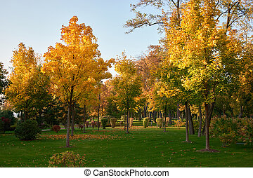 δέντρα , γραφικός , γρασίδι , foliage., φθινόπωρο