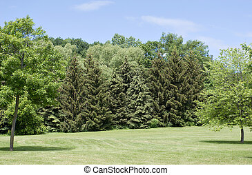 δέντρα , εναντίον , ο , ουρανόs