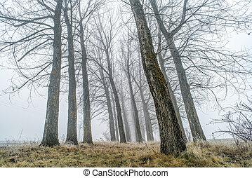 δέντρα , μέσα , ομίχλη