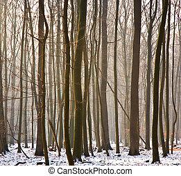 δέντρα , μέσα , χειμώναs