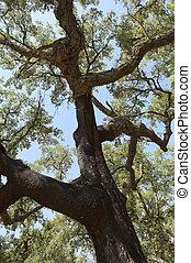 δέντρα , φελλός