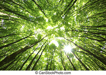 δέντρα , φόντο