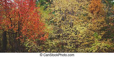δέντρα , forest., βγάζω κλαδιά , φύλλωμα , φθινόπωρο