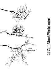δέντρο , άσπρο , περίγραμμα , παράρτημα , φόντο
