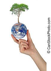 δέντρο , επάνω , γη , επειδή , ένα , σύμβολο , από , peace.elements, από , αυτό , εικόνα , επίπλωσα , από , εθνική διεύθυνση αεροναυτικής και διαστήματος