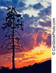 δέντρο , ηλιοβασίλεμα , πεύκο