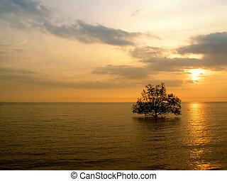 δέντρο , θάλασσα