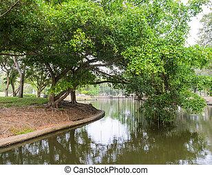 δέντρο , ινδοσύκη , πάρκο