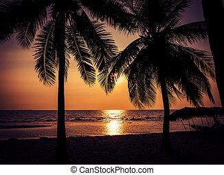 δέντρο , καρίδα , παραλία , περίγραμμα