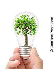 δέντρο , μέσα , ένα , λαμπτήρας φωτισμού