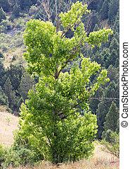 δέντρο , μέσα , φύση