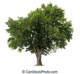 δέντρο , μήλο