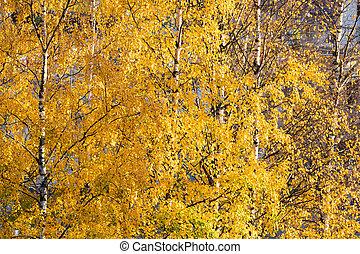 δέντρο , μπογιά , βέργα ραβδισμού , φύλλωμα , φθινόπωρο