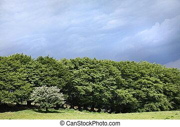 δέντρο , ομορφιά , μέσα , άνοιξη