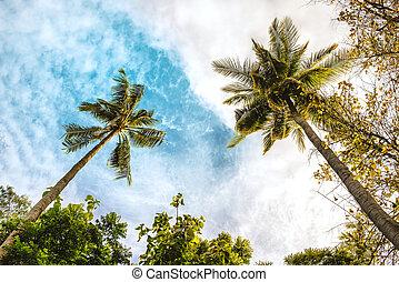 δέντρο , ουρανόs , καρίδα , μπλε