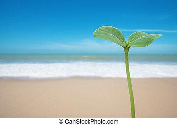 δέντρο , παραλία , νεαρό φυτό
