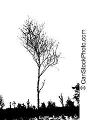δέντρο , περίγραμμα , αναμμένος αγαθός , φόντο , μικροβιοφορέας , εικόνα