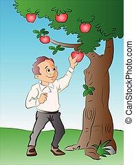 δέντρο , συλλογή , μήλο , εικόνα , άντραs