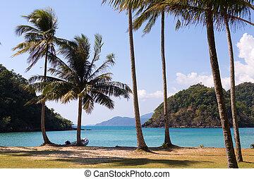δέντρο , φόντο , θάλασσα , άμμοs , αρπάζω με το χέρι ακρογιαλιά , μπλε