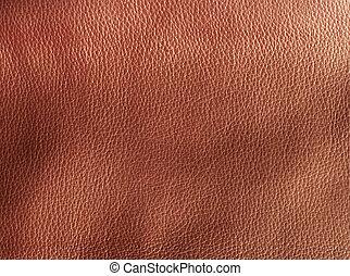 δέρμα , άξεστος