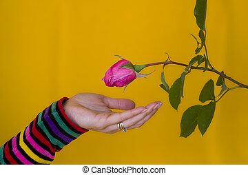 δέχομαι , λουλούδι