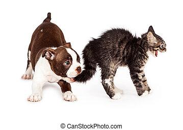 δηκτικός , θυμωμένος , κουτάβι , ουρά , γατάκι