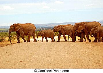 διάβαση , δρόμοs , ελέφαντας