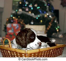 διακοπές χριστουγέννων απονέμω