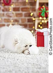 διακοπές χριστουγέννων μπάλα , παίξιμο , κουτάβι , ώρα