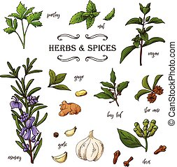 διακοσμητικός , δραμάτιο , elements., εικόνα , χέρι , βοτάνι , μικροβιοφορέας , φόντο , μετοχή του draw , spices.