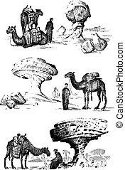 διερευνώ , γριά , περιηγητικός , ζεσεεδ , εγκαταλείπω , καμήλα , camelback, επόμενος , άραβας , εικόνα , άγαλμα , μετοχή του draw , αραβικός , χέρι , σκόνη , τοπίο , άντραs