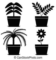 δοχείο , μικροβιοφορέας , μαύρο , λουλούδι