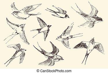 δραμάτιο , ιπτάμενος , αποδέχομαι αδιαμαρτύρητα , χέρι , μικροβιοφορέας , πουλί , μετοχή του draw