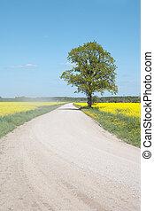 δρόμοs , μέσα , ο , canola , field.