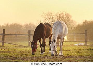 δυο , άλογα , επάνω , ράντσο