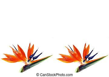 δυο , πουλί από επίγειος παράδεισος , λουλούδι