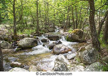 είδος γραφική εξοχική έκταση , με , δέντρα , και , ποτάμι