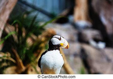 είδος θαλάσσιου πτηνού