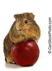 είδος ποντικού , μήλο , απολαμβάνω