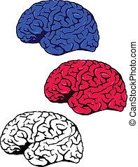 εγκέφαλοs , ανθρώπινος