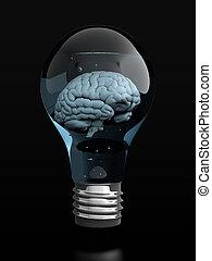 εγκέφαλοs , βολβός , ελαφρείς