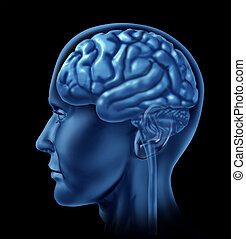 εγκέφαλοs , σύμβολο , νευρολογία