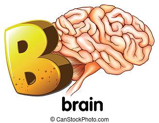 εγκέφαλοs , b , γράμμα