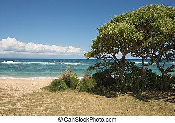 ελκυστικός , παραλία , σκιερός