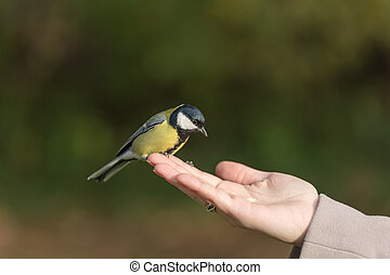 ελκυστικός , πουλί , προσοχή